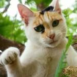 ペット保険は本当に必要なの?