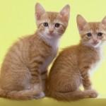 子猫用キャットフードはとても大切!元気に育ってほしいから!