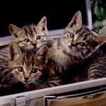 猫と一緒に電車やバスに乗るときの注意点。猫は「手回り品」?!