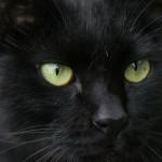 猫の目の色。綺麗の秘密とは?