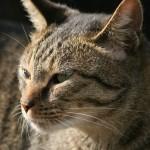 猫の粗相の原因究明!改善のヒントはコレだ!