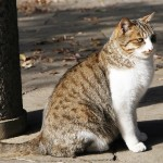 野良猫はペット保険に入れるのか?電話して聞いてみた。