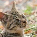 「ペット保険の加入の際に健康診断は不要」は建前です!