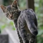 猫がフラフラ、まっすぐ歩けないのは脳の病気かも!