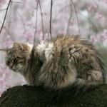 猫のケンカ傷は深刻、命の危険も!