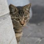 猫の肉球が痛々しく腫れあがってしまう病気とは?