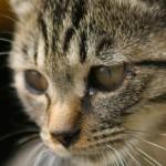 関節炎。猫は黙って痛みに耐えている可能性も!