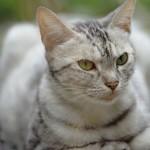 猫の糖尿病。「食べてるのに痩せてきた」は危険信号!