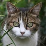 猫がはげる。まず考えるべき2つの原因とは?
