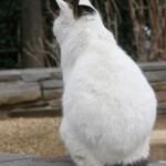 猫のリンパ節に腫れ!悪性リンパ腫の可能性も