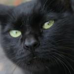 動物病院のペットホテルに猫を預けるメリット