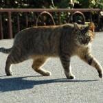 猫の塗り薬。なめて困るときの対処法