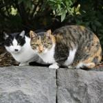 猫の出産。自然にまかせるのが基本