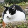 エビオス錠の原料はビール酵母。猫の体に良い効果♪