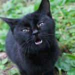 猫の出産でどんな状態なら帝王切開が必要なのか?