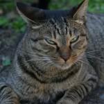 猫が下痢や便秘のときにビオフェルミンをあげても大丈夫?