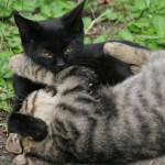 猫同士の相性を見極めるヒントはコレだ!