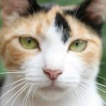 猫のお腹や耳にブツブツの発疹!何かの病気なの?