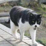 猫を叱るときに、気を付けるべき大切なポイントとは?