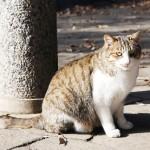 猫が掃除機が嫌いな理由とは?ストレスランキング上位にランクイン