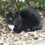 猫にとって、引っ越しは大きなストレス!少しでも減らしてあげるには?