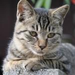 猫とじょうずに遊ぶコツは狩猟本能を刺激してあげること