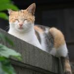 猫の腎不全の検査。最低限、飼い主が知っておきたい3つの項目