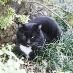 猫のヘルニア。その原因と特徴について