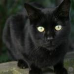 トキソプラズマ感染症について。妊婦は猫を飼ってはダメ?!