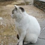 猫のやけど。大半は飼い主の責任