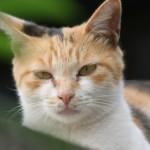 猫の出血は大変危険!知っておきたい応急手当(止血)の方法