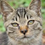 顔や耳、頭、内臓にも!猫に多い肥満細胞腫