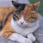 猫にパンを与えても大丈夫?そもそも与える必要が無いのです。