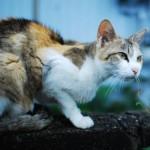猫にフライドポテトがNGな理由とは?