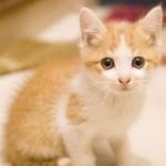 猫にドッグフードを与えてはダメな理由とは?最悪、失明の可能性まで!