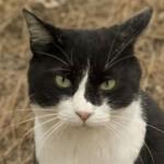 猫が苦しそうに体全体で呼吸している。膿胸という病気かも