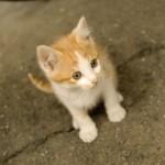 本当の意味での猫の平均寿命とは?