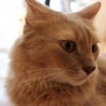 猫の首輪が危険であることを、ご存知ですか?