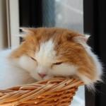 猫が餌を食べないときに試してみたいこの方法!