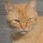 猫を飼うと部屋の臭いが気になる。3つのポイントで解消♪