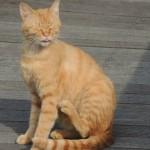野良猫を保護したい!上手に捕獲する方法とは?