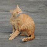 猫アレルギーを克服するための5つの対策とは?