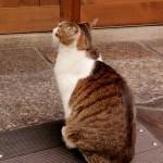猫の爪とぎ。上手にしつけられない飼い主がしやすいミスとは?