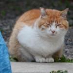 肥満対策は病気対策。ダルマみたいな猫は要注意!