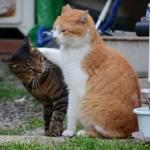 猫の嫉妬。「私にも注目して!」