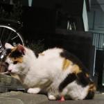 納豆大好き!猫も人間も健康が一番♪