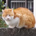 「猫には魚」というイメージは間違っています。