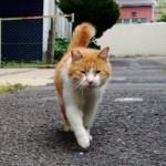 癒される♪猫のプニュプニュの肉球!