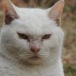 「猫が下痢気味・・・」食べ過ぎは、飼い主の責任です!