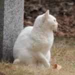 オッドアイの猫!なんて神秘的な瞳なんだろう。